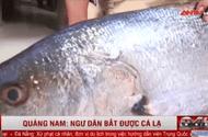 Tin tức - Video: Quảng Nam: Ngư dân bắt được cá lạ dài hơn 1,15m