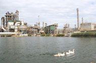 """Kinh doanh - Nhà máy Lọc dầu Dung Quất đạt Top 10 """"Nhà máy xanh thân thiện"""" 2018"""
