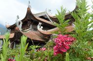 Kinh doanh - Ngất ngây sắc hồng cổ chân núi Fansipan