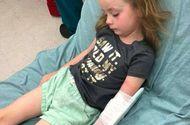 Tin tức - Đau lòng cô bé 5 tuổi bị liệt tạm thời vì bọ ve cắn vào đầu