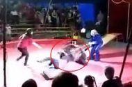 Tin tức - Clip: Kinh hoàng gấu nổi điên tấn công huấn luyện viên khi đang diễn xiếc