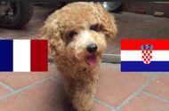 """Video: """"Chó tiên tri"""" Hulk dự đoán kết quả Pháp vs Croatia"""