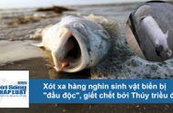 """Tin tức - Video: Xót xa hàng nghìn sinh vật biển bị """"đầu độc"""" bởi thủy triều đỏ"""