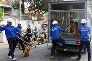 Tin tức - Bắt nhiều chó thả rông giữa trung tâm Sài Gòn
