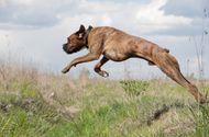 Tin thế giới - Clip thế giới động vật: Khả năng phi thường của những chú chó nhà