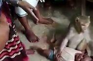 Tin tức - Video: Kinh hoàng cảnh khỉ ngang nhiên bắt cóc trẻ em ở làng quê Ấn Độ