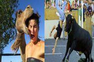 Tin tức - Video: Thót tim vì những pha tấn công con người hung hãn của động vật