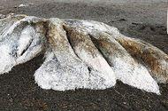 """Tin thế giới - Video: """"Quái vật không đầu"""" dạt vào bờ biển nước Nga gây xôn xao"""