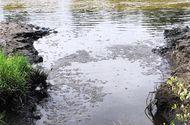 Tin tức - Cà Mau: Xả thải ra môi trường, 4 cơ sở chế biến thủy sản bị phạt hơn 800 triệu đồng
