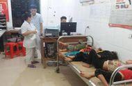 Tin tức - 7 người nhập viện cấp cứu vì bị ong đốt khi đi thu hoạch lúa