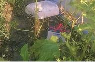 Tin tức - Cà Mau: Dùng điện bẫy chuột ngoài vườn, nam thanh niên bị điện giật tử vong