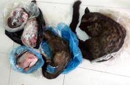 Tin tức - Nữ Chủ tịch Hội Chữ thập đỏ xã rao bán động vật hoang dã trên Facebook