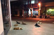 Tin tức - Bầy chó hốt hoảng chạy theo xe cứu thương chở ông chủ bị đột quỵ tới bệnh viện