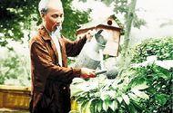 Xã hội - Bác Hồ với Tết Trồng cây năm Kỷ Hợi 60 năm về trước