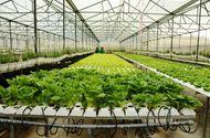 Thực phẩm - Lấy công nghệ cao làm động lực phát triển nông nghiệp Thủ đô