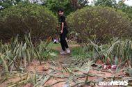 Xã hội - Du khách hả hê giẫm đạp không thương tiếc hàng cây xanh tại lễ hội Đền Hùng