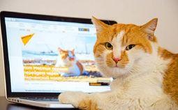 """- Kỳ lạ: """"Giám sát viên"""" của cây cầu dài nhất châu Âu là một chú mèo"""