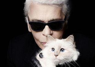Mèo cưng của Karl Lagerfeld sẽ trở thành chú mèo giàu nhất thế giới?