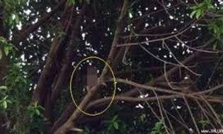 Sự kiện hàng ngày - Phú Yên: Một phụ nữ treo cổ tự tử trên giàn bí