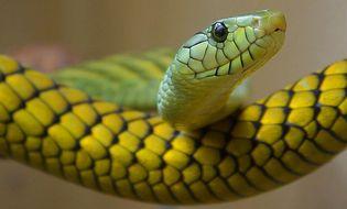 Chuyện lạ - Người phụ nữ hoảng sợ vì phát hiện rắn nằm ở cốp xe mới mua
