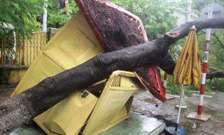Sự kiện hàng ngày - Thanh Hóa: Cây đổ đè bẹp bốt CSGT