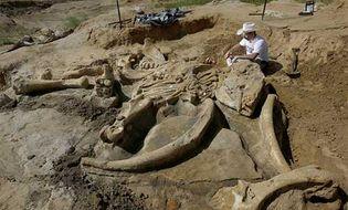 Khám phá - Phát hiện bộ xương khổng lồ của sinh vật thời kỷ băng hà