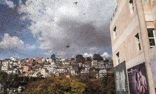 Chuyện lạ - Hàng triệu con châu chấu tràn ra đường khiến giao thông hỗn loạn