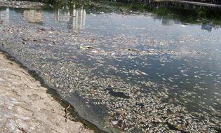 Xã hội - Clip: Cá chết hàng loạt nổi trắng hồ Thiền Quang