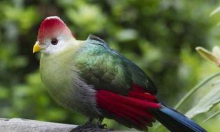 Tài nguyên - Các loài chim có nguy cơ tuyệt chủng vì biến đổi khí hậu