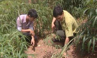 Tài nguyên - Voi rừng xuất hiện phá hoại hoa màu tại Đắk Nông
