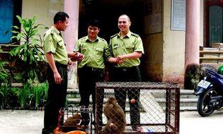 Tài nguyên - VQG Hoàng Liên tiếp nhận 2 cá thể khỉ có tên trong Sách đỏ
