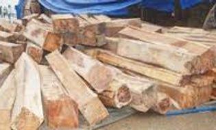 Tài nguyên - Liên tiếp bắt giữ hai vụ vận chuyển gỗ lậu trong một ngày