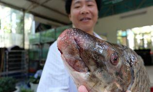 Ẩm thực - Vào Tây Nguyên săn cá tiến vua về Hà Nội nhậu