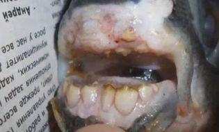 Sự kiện hàng ngày - Bắt được chú cá vô cùng kỳ lạ có hàm răng như của con người