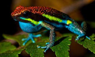 Khám phá - 10 loài động vật có nọc độc đáng sợ nhất thế giới