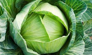 Sức khoẻ - Những bệnh tuyệt đối không được ăn rau bắp cải
