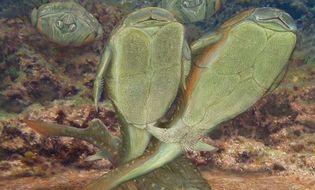 Khám phá - Phát hiện bộ phận sinh dục giống đực gần 4 tỷ năm trước