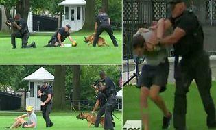 Thế giới 24h - Chó nghiệp vụ tấn công kẻ lạ mặt trèo tường rào Nhà Trắng