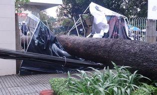 Sự kiện hàng ngày - TP.HCM: Mưa lớn, cây cổ thụ đổ vào Nhà hát Hòa Bình