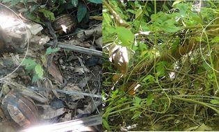 Tài nguyên - Tái thả về rừng 3 loài động vật hoang dã thuộc nhóm nguy cấp