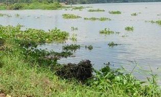 Sự kiện hàng ngày - Đi đánh cá, phát hiện thi thể bé gái 3 tuổi trôi sông