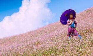 Cộng đồng mạng - Xôn xao chủ vườn Tam giác mạch vui khi khách dẫm đạp hoa