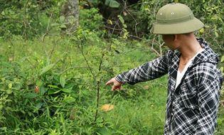Xã hội - Clip: Người dân Nghệ An đổ xô đi săn rắn lục đuôi đỏ