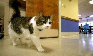 Thế giới - Video: Oscar - Chú mèo lạ có khả năng tiên đoán cái chết