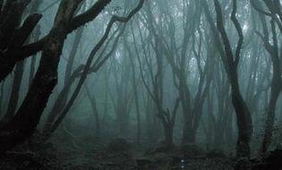 Khám phá - Rợn người với khu rừng ma quái ở Romania