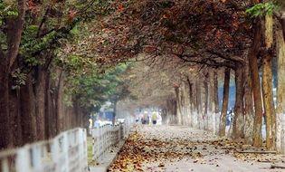 Xã hội -  Gần 200 cây xanh tại Hà Nội sẽ bị chặt