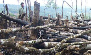 Tài nguyên - Sơn La: Rừng tự nhiên Ngọc Chiến đang cạn kiệt