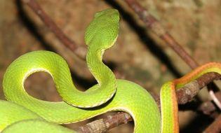 Thế giới - Video: Những giống loài nhỏ nhưng rất đáng sợ tấn công người dân năm 2014