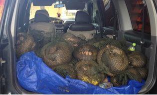Tài nguyên - Phối hợp bắt giữ 269kg tê tê trị giá gần 1 tỷ đồng