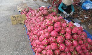 Thị trường - Thanh long ruột đỏ: Miền Nam 10.000 đồng/3 kg, Hà Nội 40.000/kg